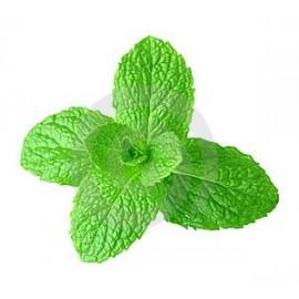 Natural Mint (Menta)